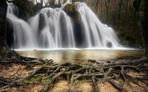 Papéis de Parede Cachoeira, raízes de árvores