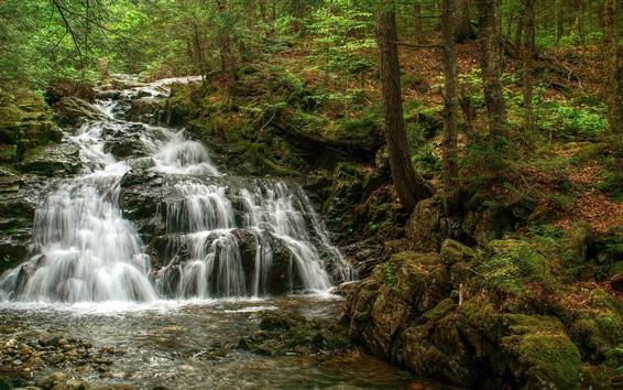 Fond d'écran Cascades, arbres, forêt, mousse
