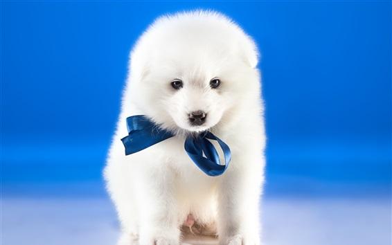 壁紙 白い犬、青い背景