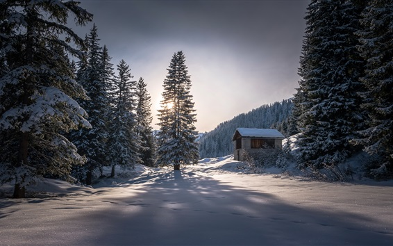 Wallpaper Winter, hut, trees, thick snow, cold