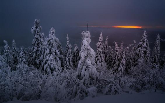 Fond d'écran Nuit d'hiver, neige, arbres