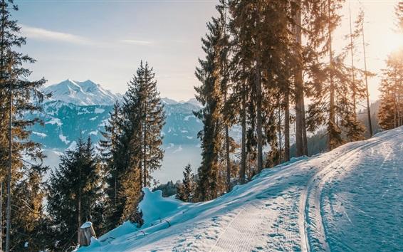 Wallpaper Winter, snow, trees, path, sunset