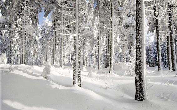 Wallpaper Winter, snow, trees, sun