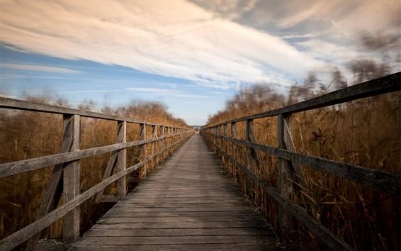 Wallpaper Wood bridge, reeds