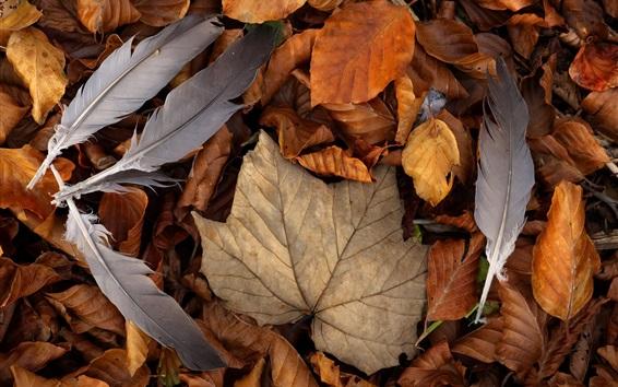 Обои Осень, листья, перья