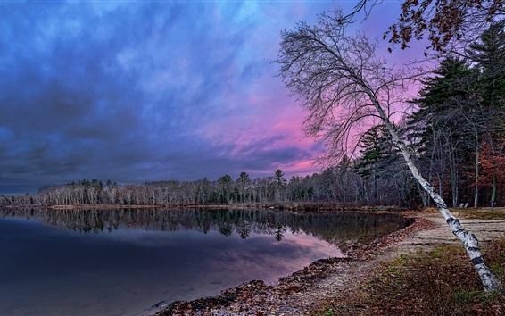 壁紙 バーチ、森林、湖、夕暮れ