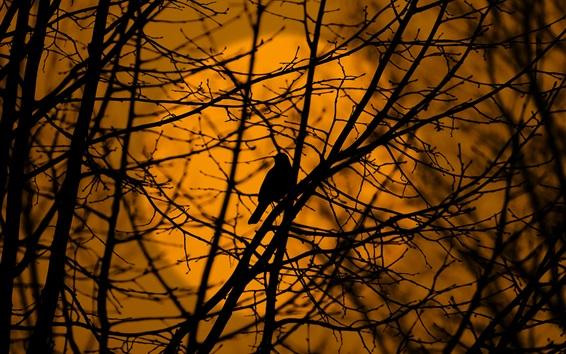 Обои Птица в дереве, ветки, силуэт, сумерки