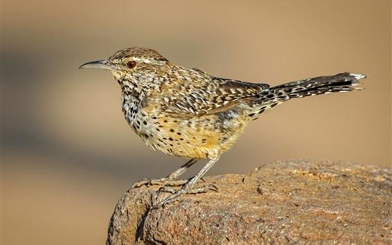 壁紙 鳥、尾、くちばし