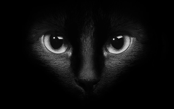 Papéis de Parede Cara de gato preto, olhos, escuridão