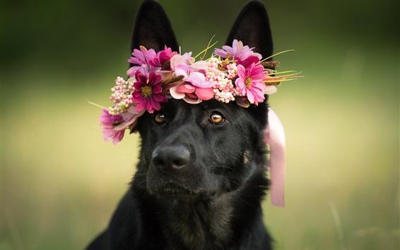 Обои Черная собака, венок, цветы