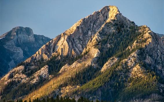 Обои Канада, горы, деревья, Национальный парк Банф