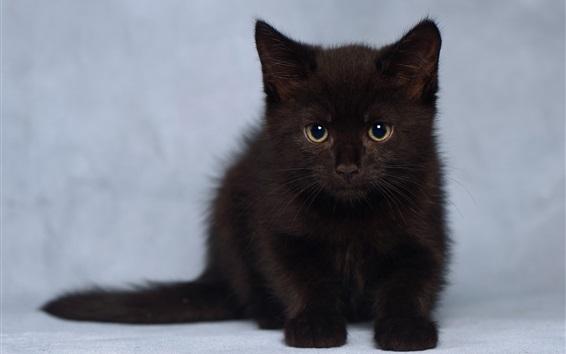 Wallpaper Cute furry black kitten