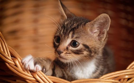 Wallpaper Cute kitten, paw, basket