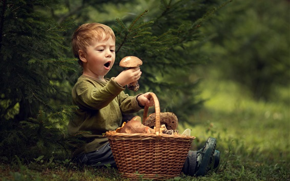 Fond d'écran Mignon petit garçon et champignons, panier, herbe