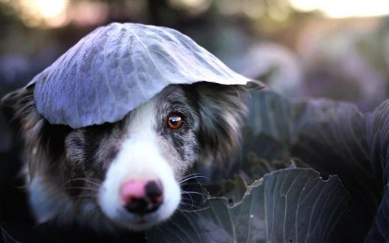 Wallpaper Dog, face, leaf, funny