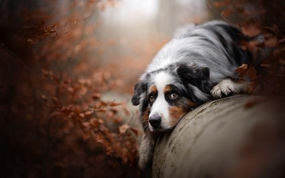Wallpaper Dog rest on tree stem