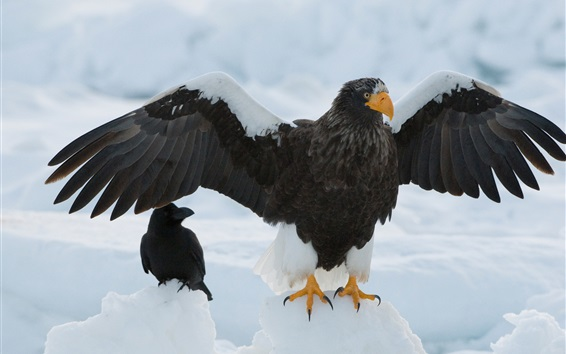 Wallpaper Eagle, wings, snow
