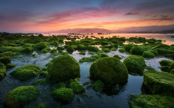 Fond d'écran Soir, coucher de soleil, pierres, mousse, mer