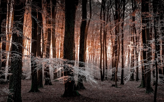 Wallpaper Forest, frost, winter, morning