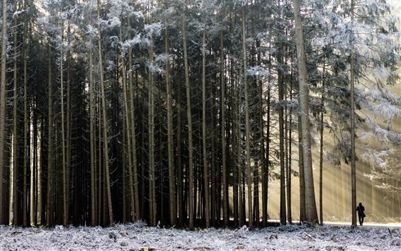 Fond d'écran Forêt, neige, hiver, homme, soleil, matin