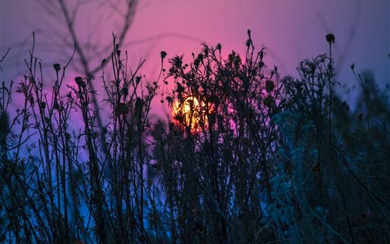 Обои Трава, закат, фиолетовое небо