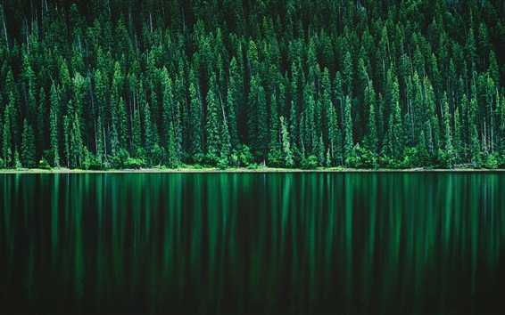 Wallpaper Green forest, river, nature