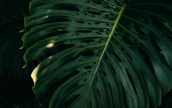 壁紙 緑の葉、闇