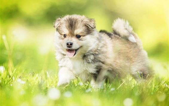 Papéis de Parede Cachorro feliz, grama, verão