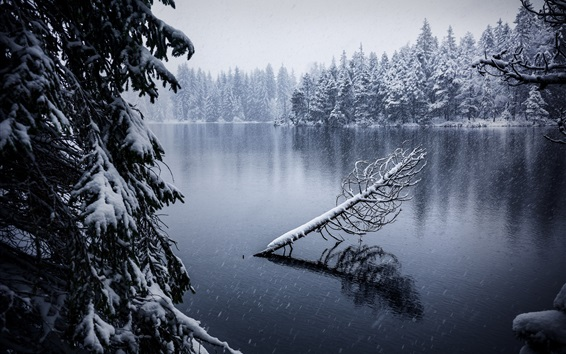 Wallpaper Jura, Switzerland, lake, snow, trees, winter