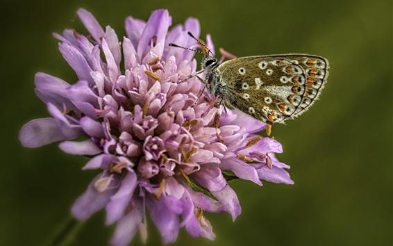 Wallpaper Light purple flower, butterfly