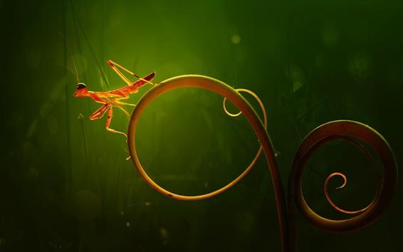 Papéis de Parede Pequena mantis, mundo macro