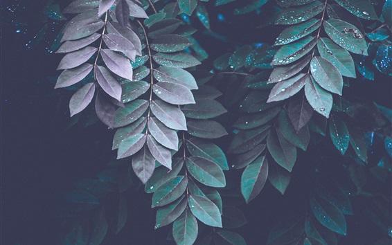 Papéis de Parede Muitas folhas, gotas de água