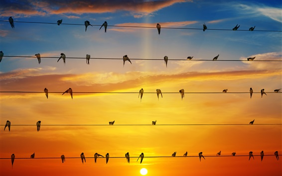 Wallpaper Many swallows stand on wires, sunset