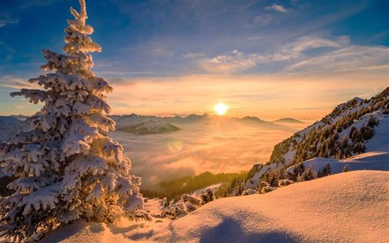 Wallpaper Mountain top, snow, trees, fog, sunrise, fog