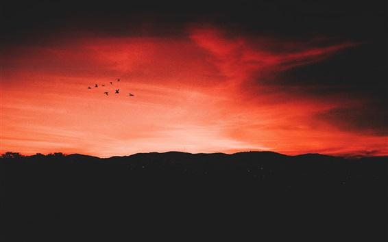Wallpaper Night, sunset, red sky, birds flight