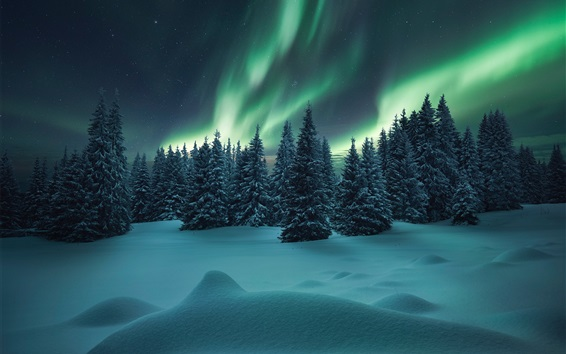 Wallpaper Northern lights, forest, trees, winter, snow, night