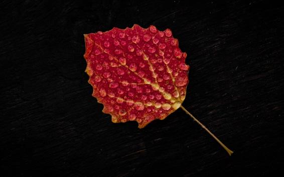 Обои Один красный лист, капли воды