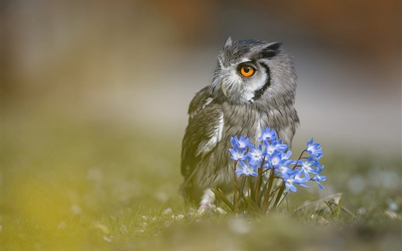 Wallpaper Owl, blue flowers