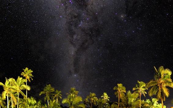 Обои Пальмы, звёзды, небо, ночь