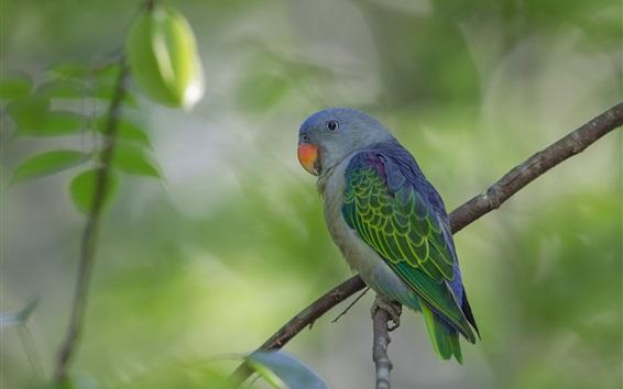 Wallpaper Parrot, tree branches, bokeh