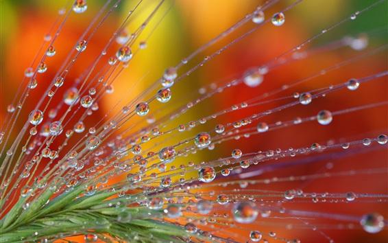 Papéis de Parede Plantas macro fotografia, gotas de água