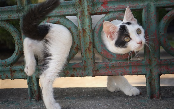 배경 화면 쾌활한 새끼 고양이, 재미있는 동물