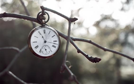 Wallpaper Pocket watch, twigs