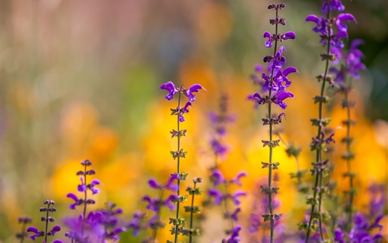 Wallpaper Purple flowers, spring, bokeh