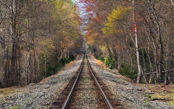 Обои Железная дорога, следы, лес, деревья