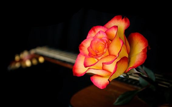Wallpaper Red-orange rose
