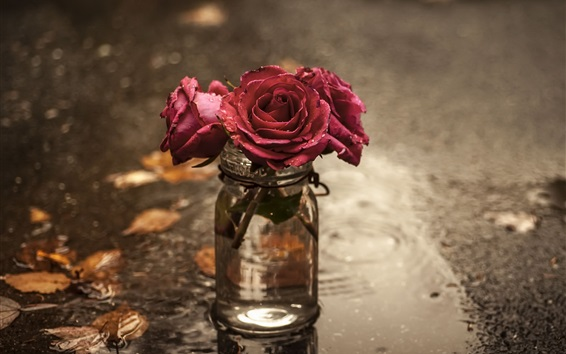 Wallpaper Red roses, glass cup, wet ground