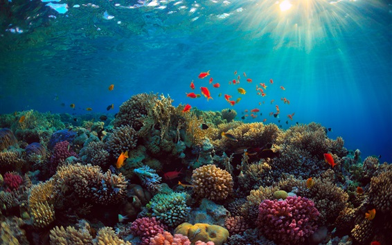 Wallpaper Sea, corals, fish, underwater