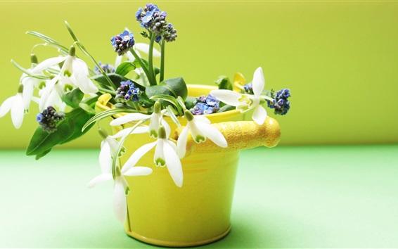 Fondos de pantalla Flores de Snowdrops, florero amarillo