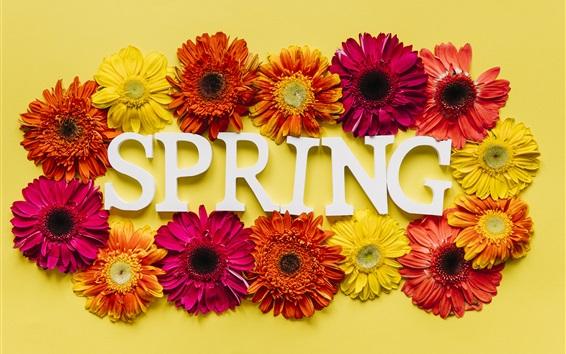 Papéis de Parede Primavera, crisântemo colorido